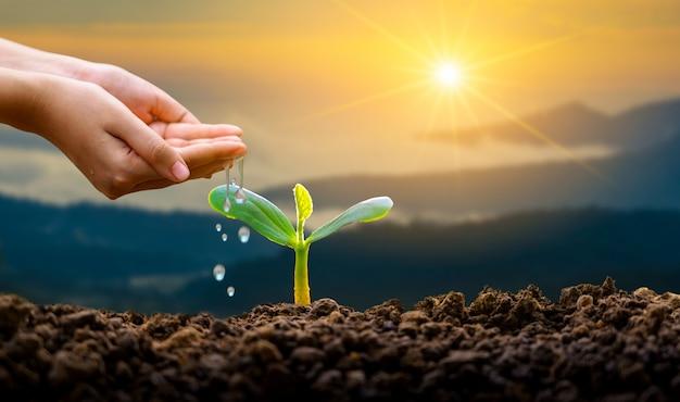 Bewässerungsanlage mit den händen Premium Fotos