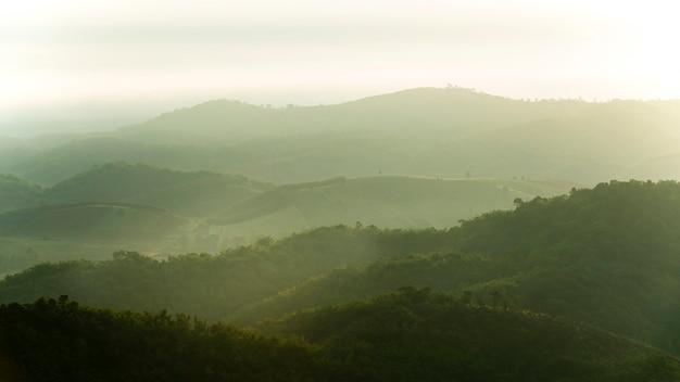 Bewaldeter berghang in der tief liegenden wolke mit den immergrünen nadelbäumen eingehüllt in nebel in einer szenischen landschaftsansicht Premium Fotos