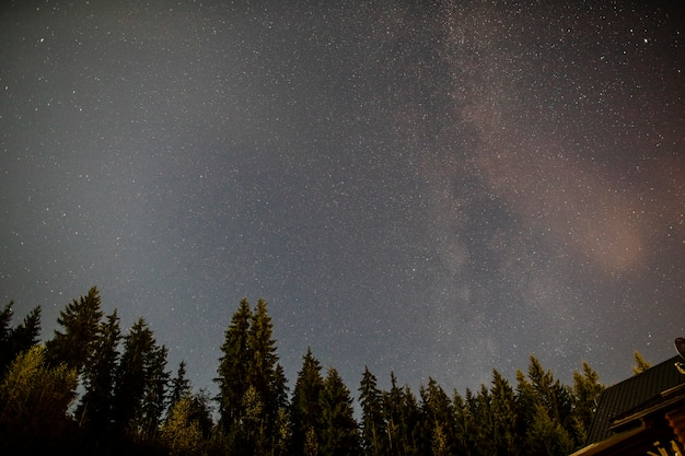 Bewölkte sternenklare nacht mit immergrünen bäumen Kostenlose Fotos