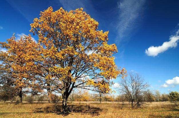 Bezaubernde herbstlandschaft in einem landschaftspark Premium Fotos