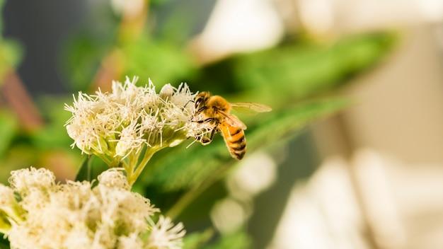Biene auf der suche nach pollen Kostenlose Fotos