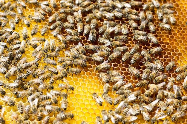 Bienen auf waben. nahaufnahme von bienen auf der bienenwabe im bienenstock. Premium Fotos