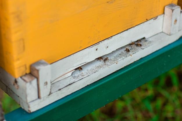 Bienen fliegen in der nähe des bienenstocks Premium Fotos