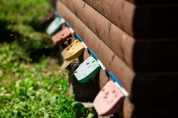 Bienen fliegen in ein wellnesshaus, um zu schlafen Premium Fotos