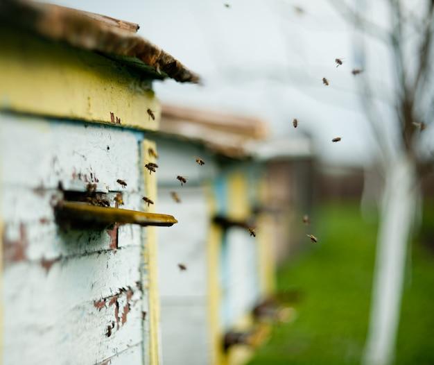 Bienen fliegen um den bienenstock Premium Fotos