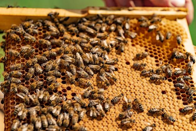 Bienen sitzen auf einem holzrahmen der bienenwabe im sommer / in der nahaufnahme Premium Fotos