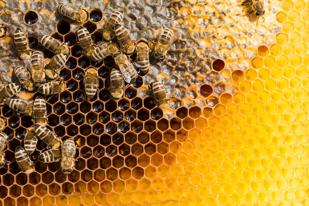 Bienenwabe mit bienen Kostenlose Fotos