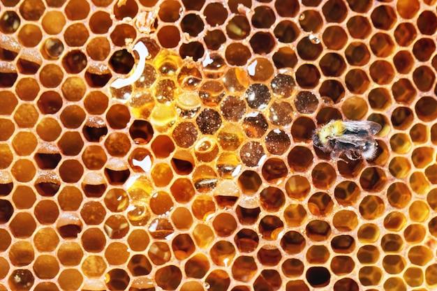 Bienenwaben Premium Fotos