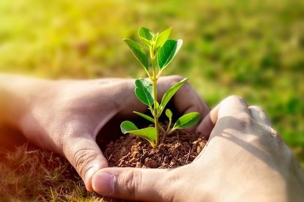 Bild der grünpflanze in den menschlichen händen. Premium Fotos