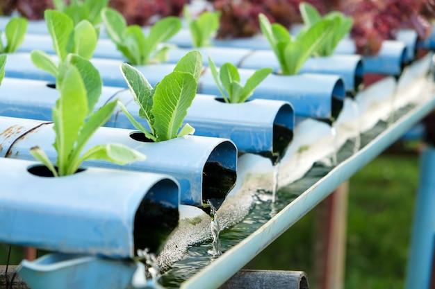 Bild der hydroponikgemüsefarm Premium Fotos