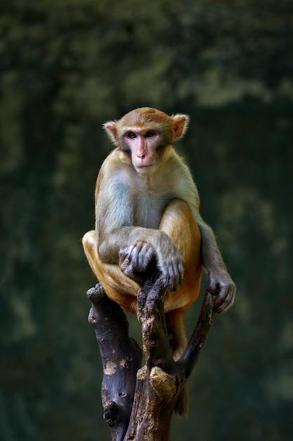 Bild des affen sitzend auf einem baumast. tiere der wild lebenden tiere. Premium Fotos