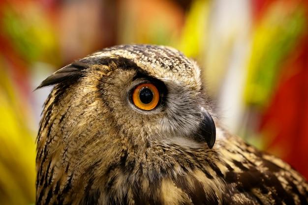 Bild einer eule auf natur. vögel. wilde tiere. Premium Fotos
