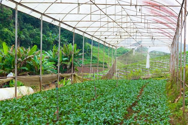 Bio-gemüsegarten Premium Fotos