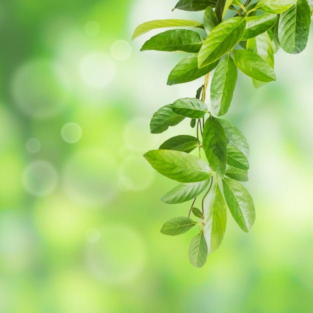 Blätter der kletterpflanzenpflanze Premium Fotos