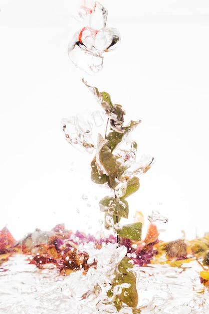 Blätter fallen ins wasser Kostenlose Fotos