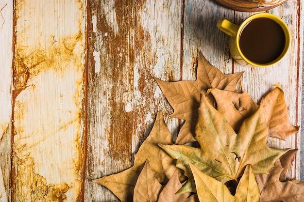 bl tter in der n he von kaffeetasse download der kostenlosen fotos