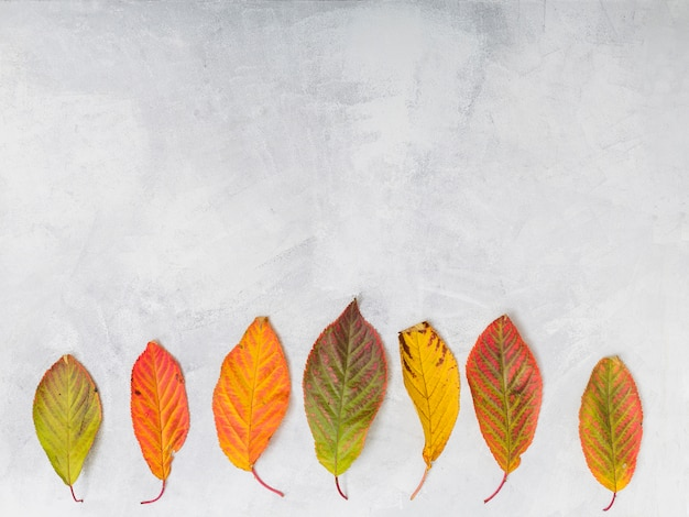 Blätter Kostenlose Fotos
