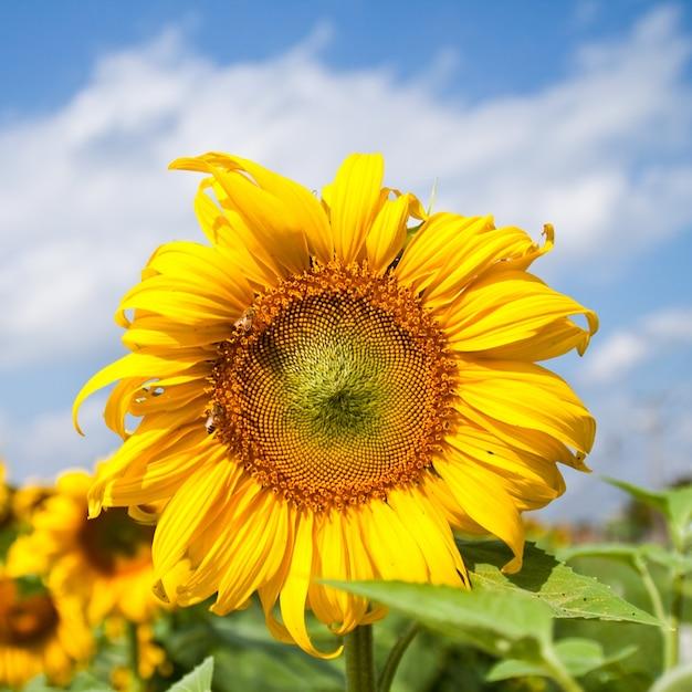 Blatt Sommer Blühen Pflanze Download Der Kostenlosen Fotos