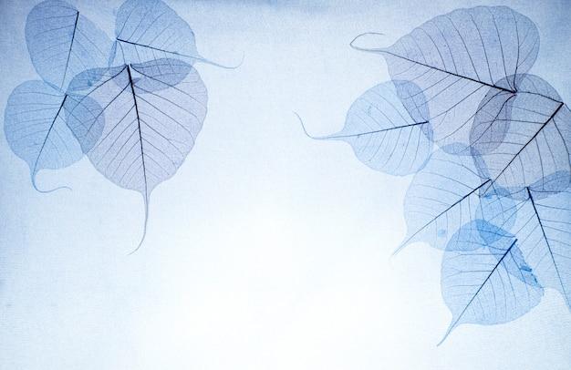 Blau hinterlässt einen hellen hintergrund Premium Fotos