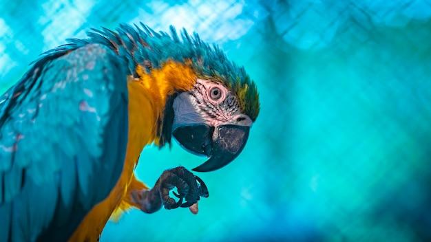 Blau-und-gelber macaw Premium Fotos