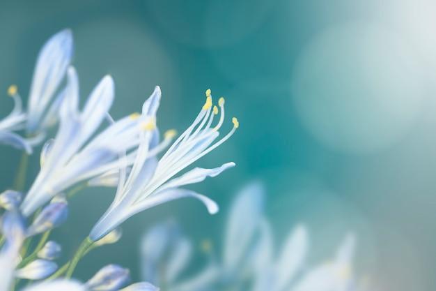 Blaue blume in freier wildbahn Kostenlose Fotos