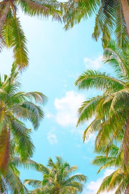 Blauer himmel umrahmt von palmblättern Premium Fotos