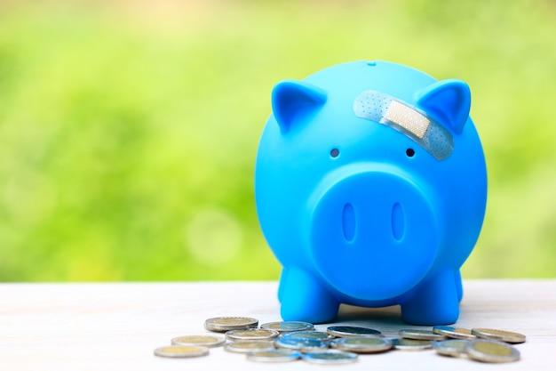Blaues schweinchen befestigt am gips am kopf naturgrün Premium Fotos