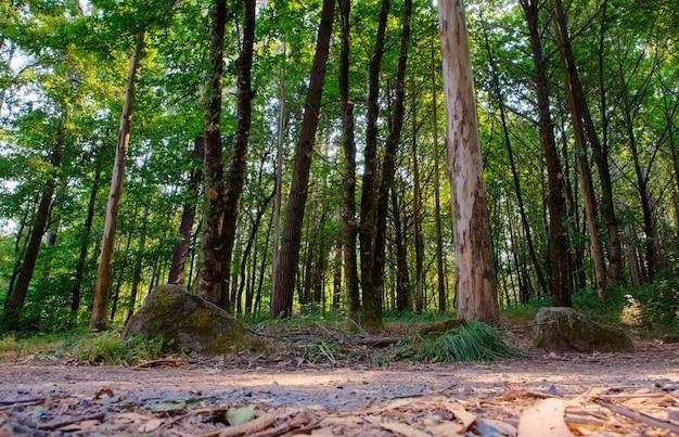 Blick auf bäume Premium Fotos