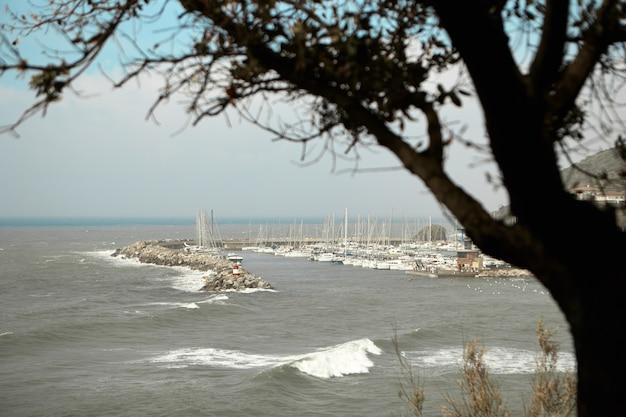 Blick auf den yachtclub und den yachthafen mit einem einzigen baum im vordergrund. Kostenlose Fotos