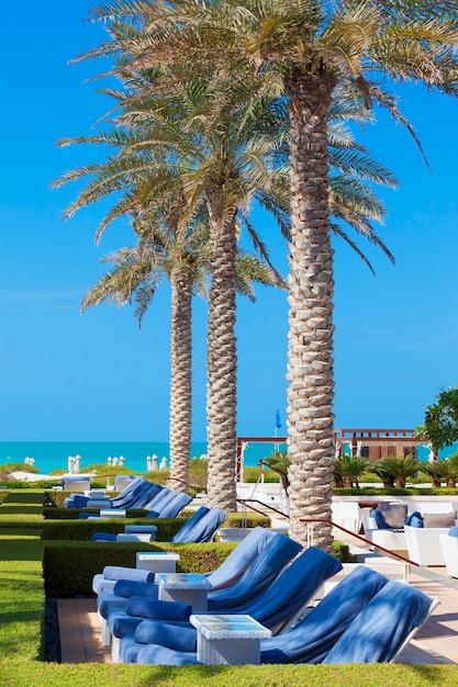 Blick auf liegestühle und palmen Premium Fotos