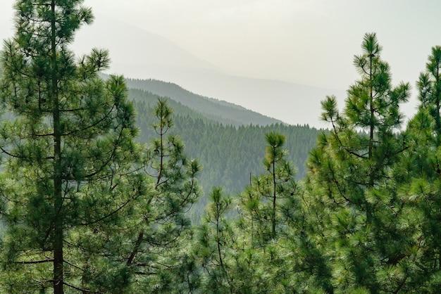 Blick durch kiefer auf bergwaldlandschaft. Kostenlose Fotos
