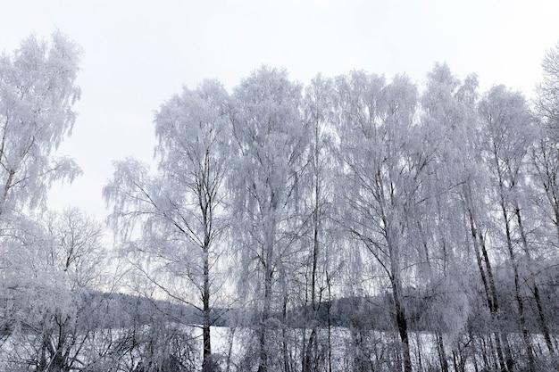 Bloße laubbäume, fotografiert in der wintersaison nach schneefall und frost. foto bei bewölktem wetter, der himmel ist grau Premium Fotos