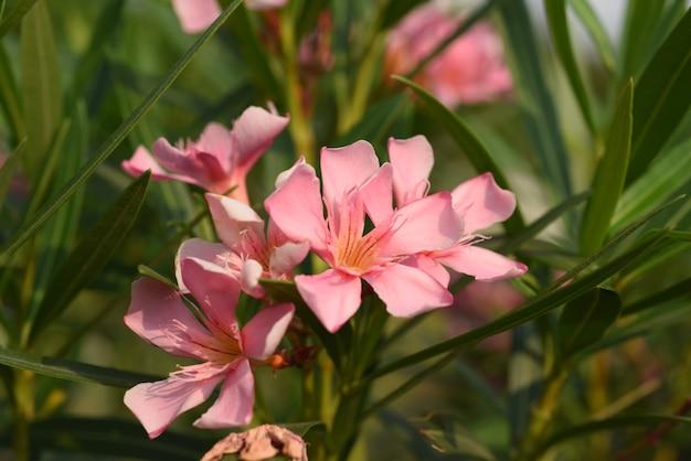 Blühende blume und grünes blatt mit hellem himmel Premium Fotos