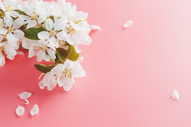 Blühende sakura, frühlingsblumen auf rosa Premium Fotos