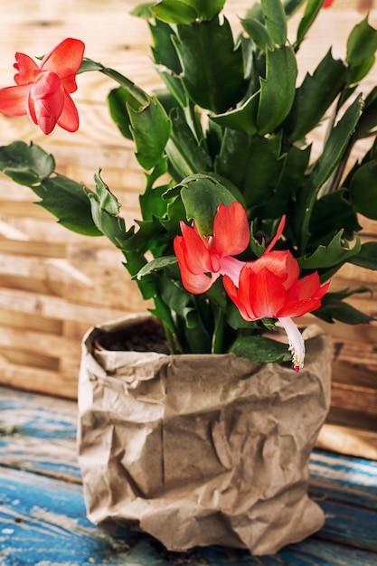 Blühende zierpflanzen Premium Fotos