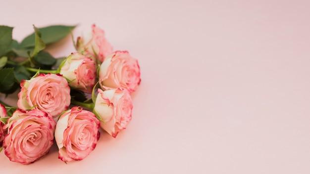 Blühender rosa rosenkopienraum Kostenlose Fotos
