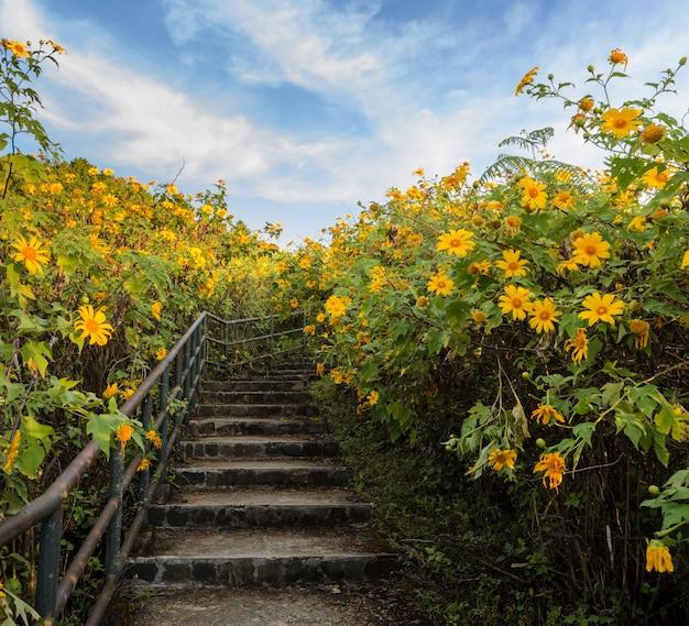 Blühendes tal der schönen mexikanischen sonnenblume in meahongson, thailand Premium Fotos