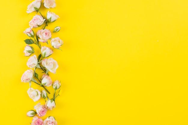 Blüht hintergrundexemplarplatz Kostenlose Fotos
