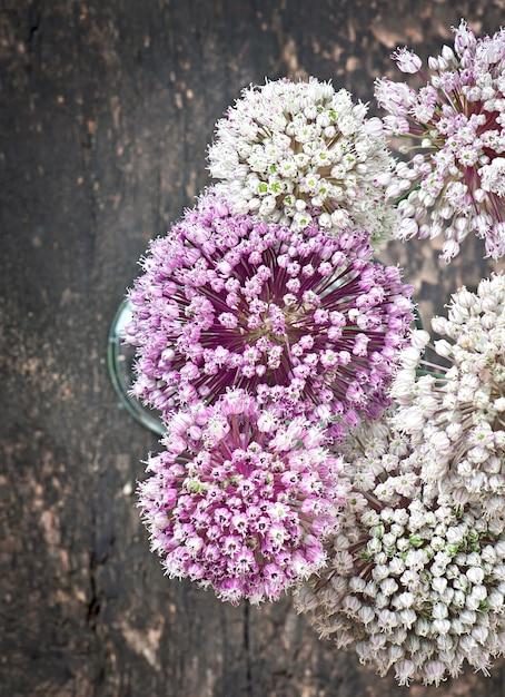 Blüht zwiebel auf altem holztisch Kostenlose Fotos