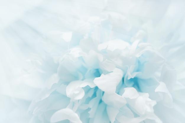 Blütenblätter voller licht. Premium Fotos