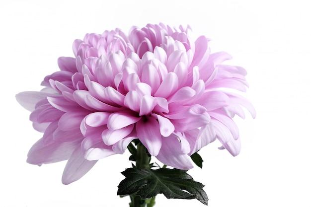 Blütenkopf isoliert Kostenlose Fotos