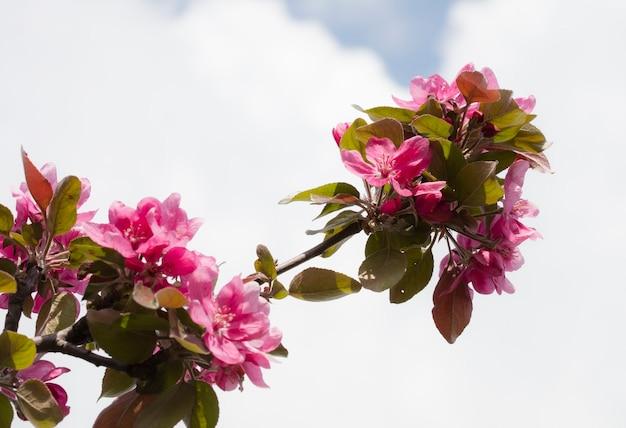 Blume auf dem baum, blühender baum Premium Fotos