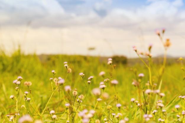 Blume auf dem gebiet und hintergrund der wolke. Premium Fotos