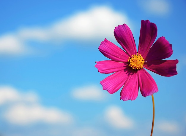 Blume auf einem hintergrundhimmel Premium Fotos