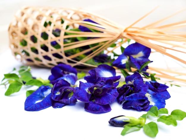 Blume der blauen erbse oder schmetterlingserbse lokalisiert auf weiß. Premium Fotos
