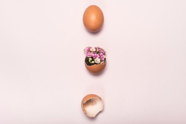 Blume in defektem ei auf rosafarbener tabelle Kostenlose Fotos
