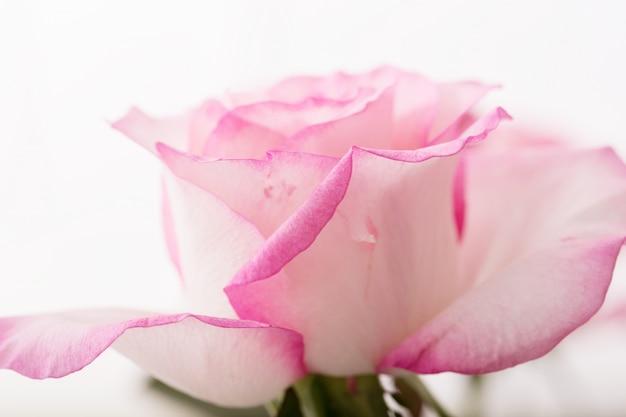 Blume Kostenlose Fotos