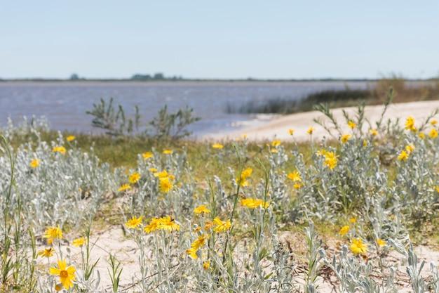Blumen an der küste in der nähe von wasser Kostenlose Fotos