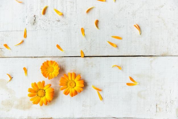 Blumen der ringelblume Premium Fotos