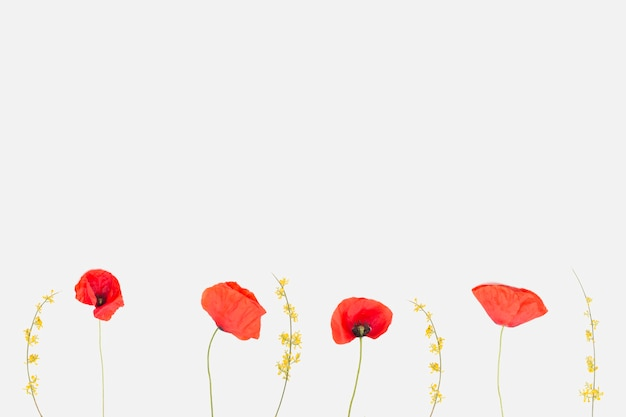 Blumen flach legen Kostenlose Fotos